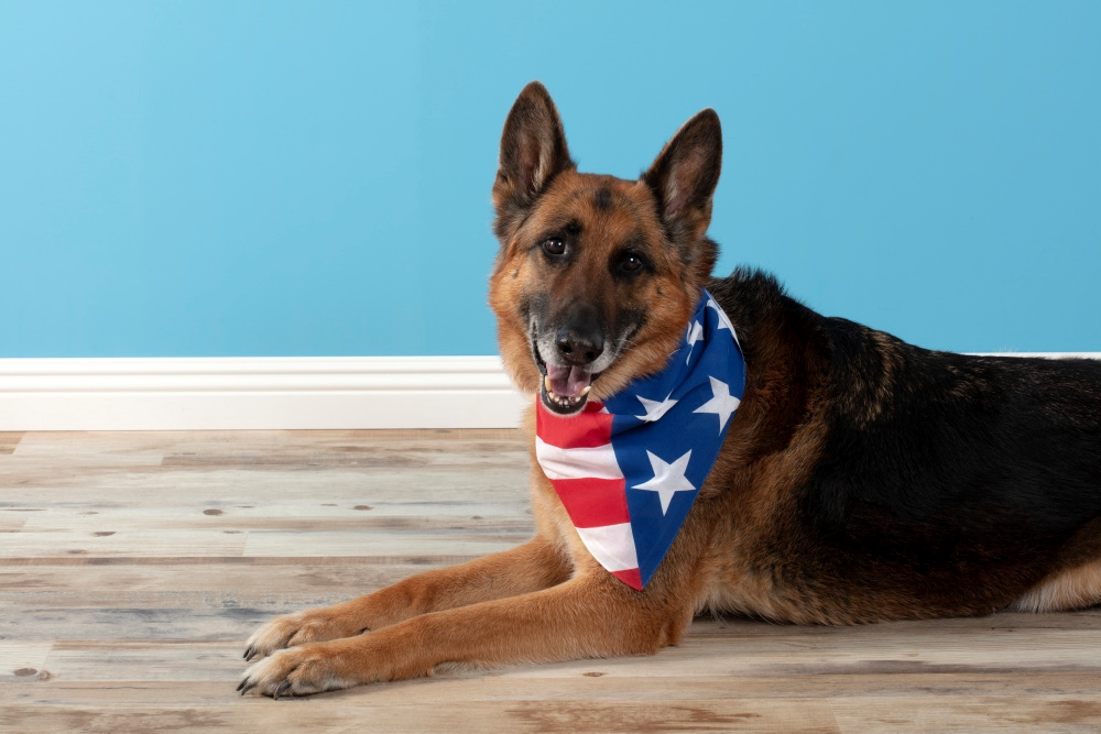Picture of American Flag Dog Bandana